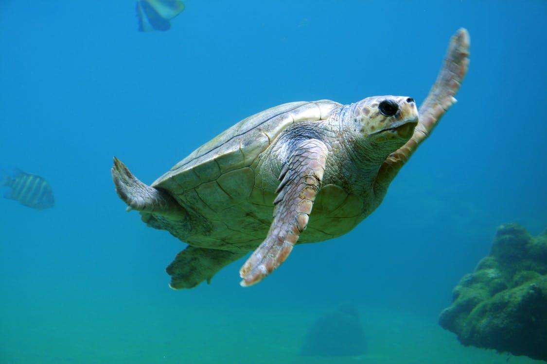 Ekosystemen i våra hav
